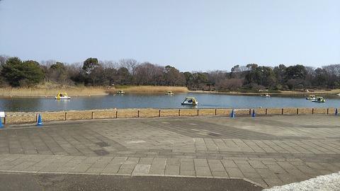 昭和記念公園_水鳥の池とボート