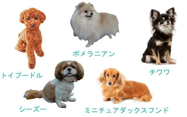レンタルできる犬の種類